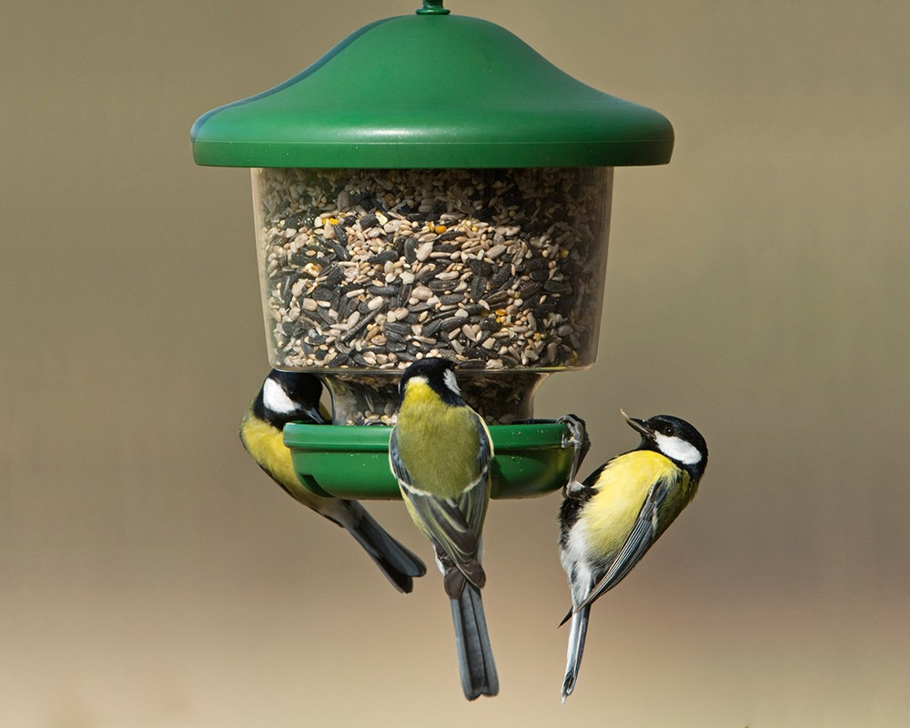 My Favourites™ Clinger Seed Feeder