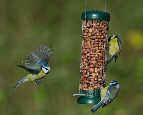 Bird Lovers™ Peanut Feeder