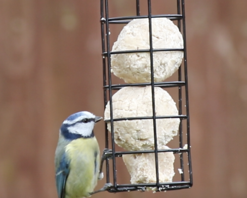 Super Suet Fat Balls