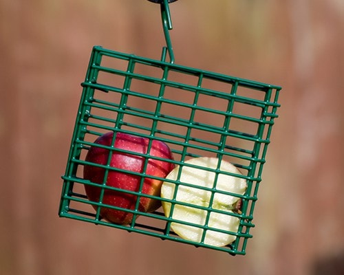 Suet Block Feeder