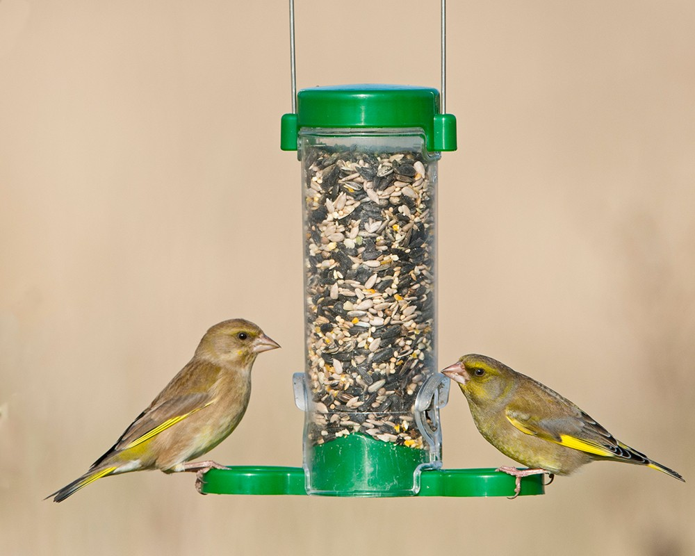 Get Set Go!™ Seed Feeder