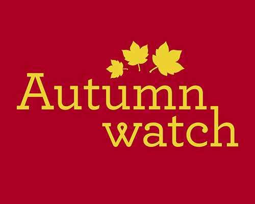 Autumnwatch 2017 returns to our screens