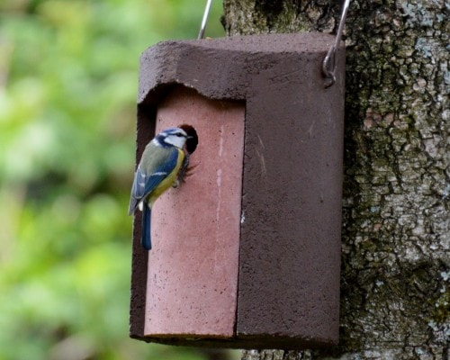 National Nest Box Week 2018
