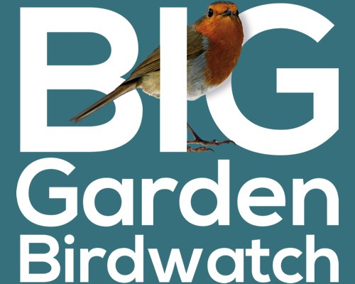 Big Garden Birdwatch 2017 Results