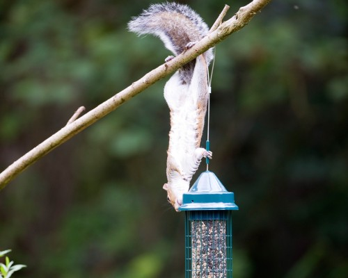 New to Peckamix - Squirrel Proof Feeders!